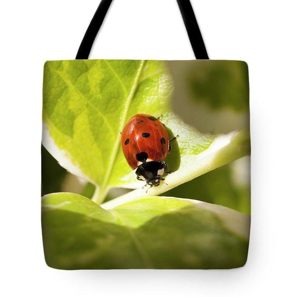 The Ladybug  Tote Bag