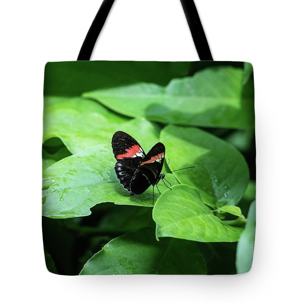 The Leaf Is My Plate Tote Bag