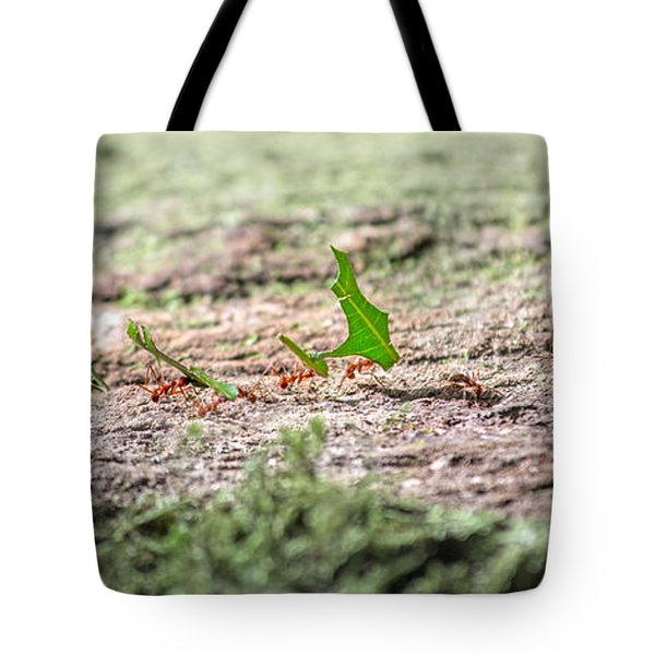 The Leaf Parade  Tote Bag by Betsy Knapp