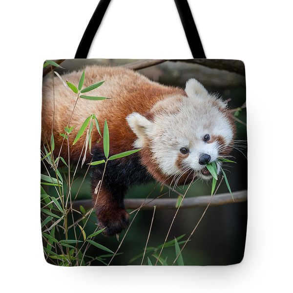 The Levitating Red Panda Tote Bag by Greg Nyquist