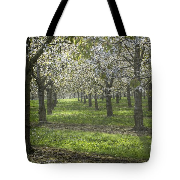 The Life Awakes 12 Tote Bag