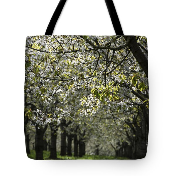 The Life Awakes 15 Tote Bag