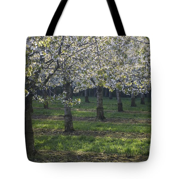 The Life Awakes 5 Tote Bag