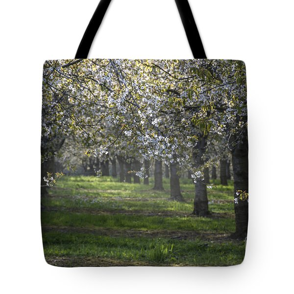 The Life Awakes 6 Tote Bag