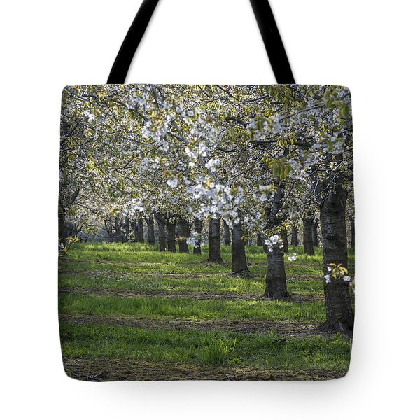 The Life Awakes 7 Tote Bag