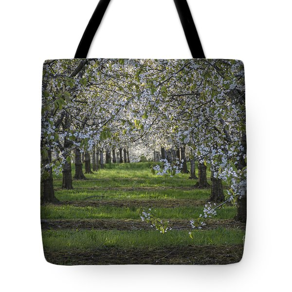 The Life Awakes 8 Tote Bag