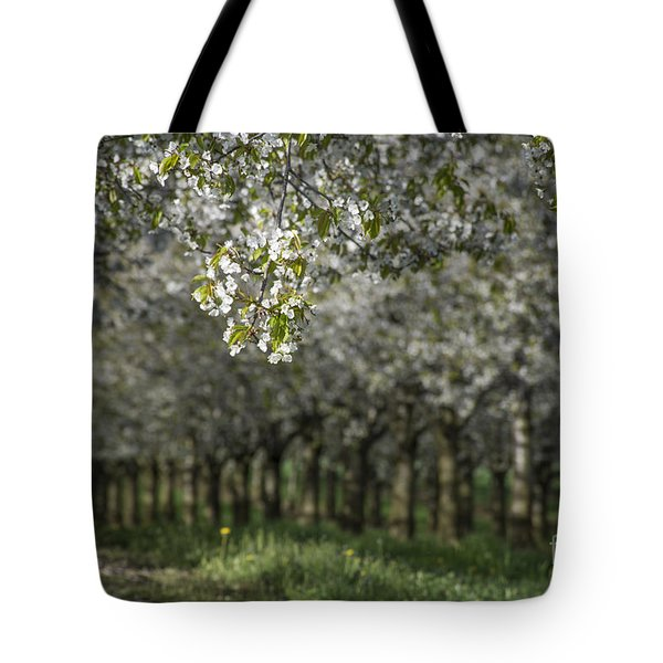 The Life Awakes Tote Bag