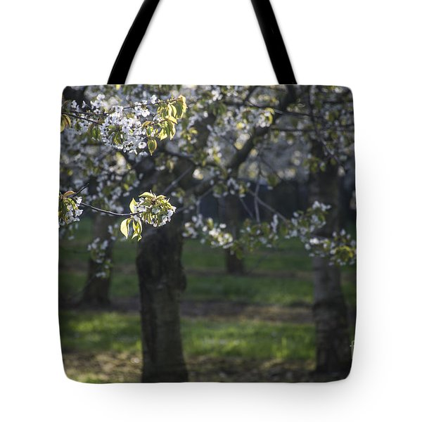 The Life Awakes3 Tote Bag