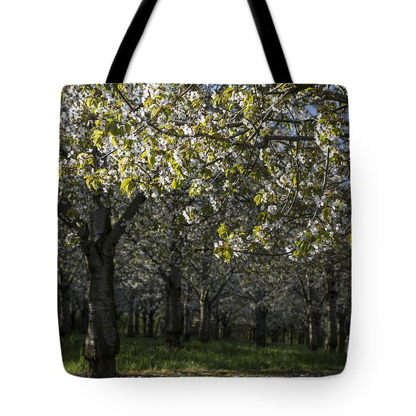 The Life Awakes4 Tote Bag