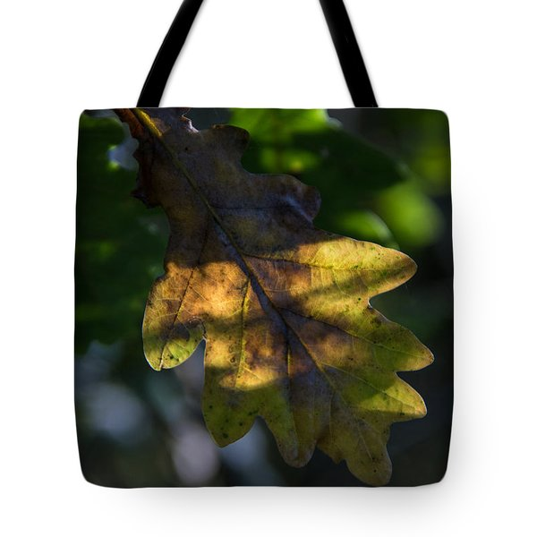 Tote Bag featuring the photograph The Light Fell Softly by Odd Jeppesen