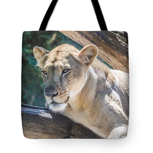 The Lioness Tote Bag by David Collins
