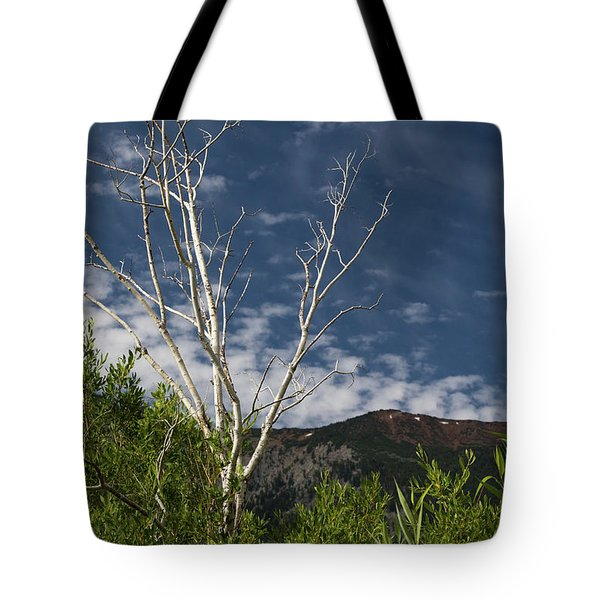The Lonely Aspen  Tote Bag