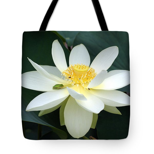 The Lotus Flower The Frog And The Bee Tote Bag