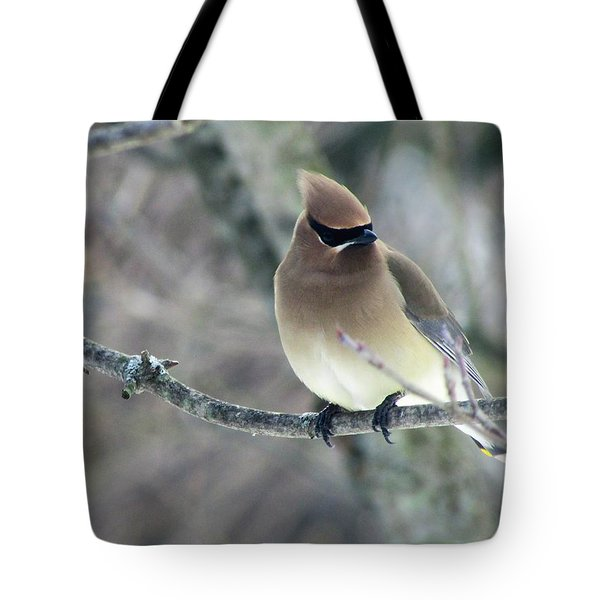 The Masked Cedar Waxwing Tote Bag