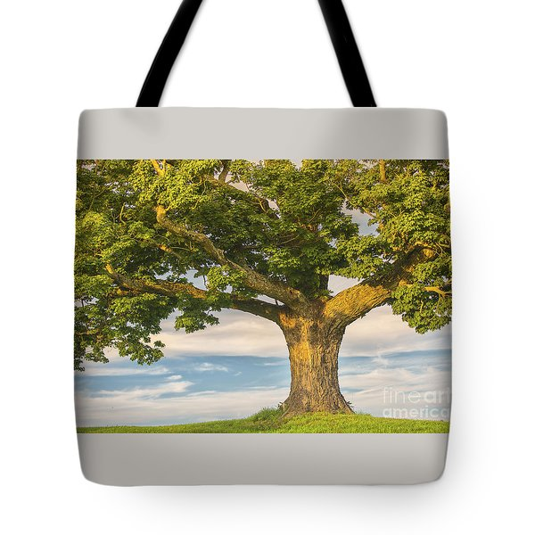 Tote Bag featuring the photograph The Mighty Maple by Mary Lou Chmura