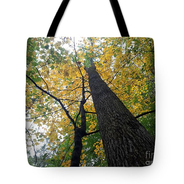 The Mighty Tulip Popular State Tree Of Indiana Tote Bag