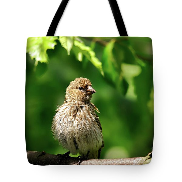 The Musician Takes A Break Tote Bag by Lois Bryan