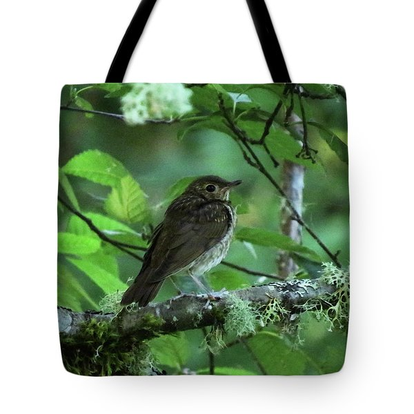 ..the Mysterious Thrush.. Tote Bag by I'ina Van Lawick