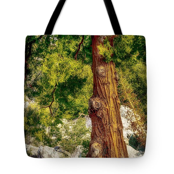 The Old Rugged Tree Tote Bag by Joseph Hollingsworth