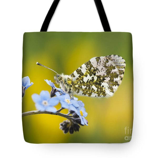 The Orange Tip Butterfly Tote Bag