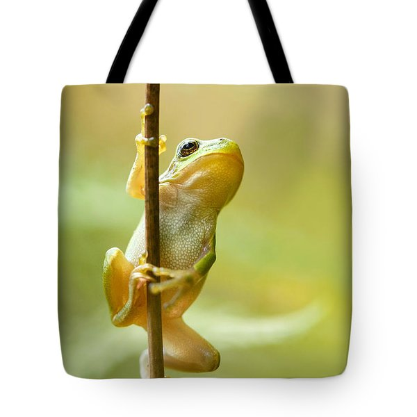 The Pole Dancer - Climbing Tree Frog  Tote Bag by Roeselien Raimond
