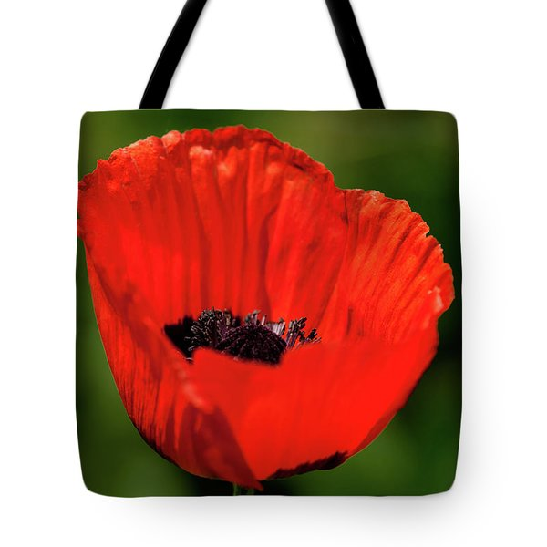 Tote Bag featuring the photograph The Poppy Next Door by Onyonet  Photo Studios