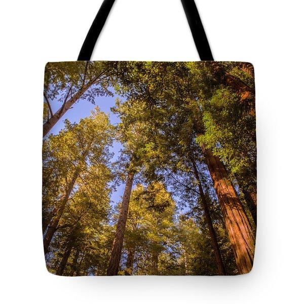 The Portola Redwood Forest Tote Bag