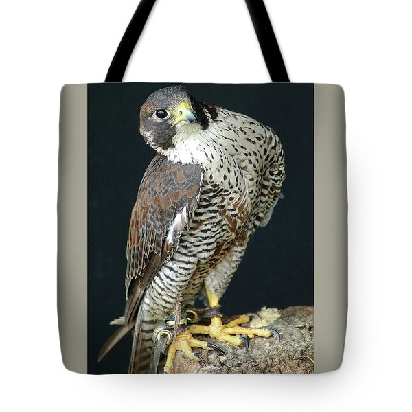 The Proud Falcon Tote Bag