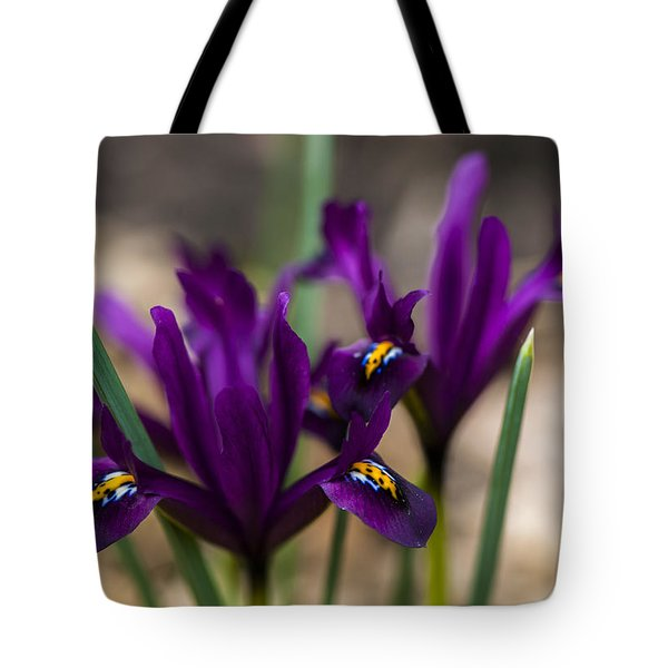 The Rise Of The Early Royal Dwarf Iris Tote Bag