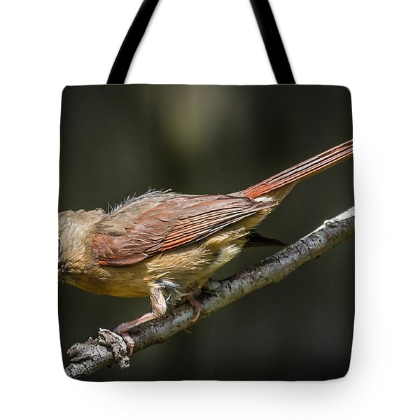 The Wet Look Tote Bag