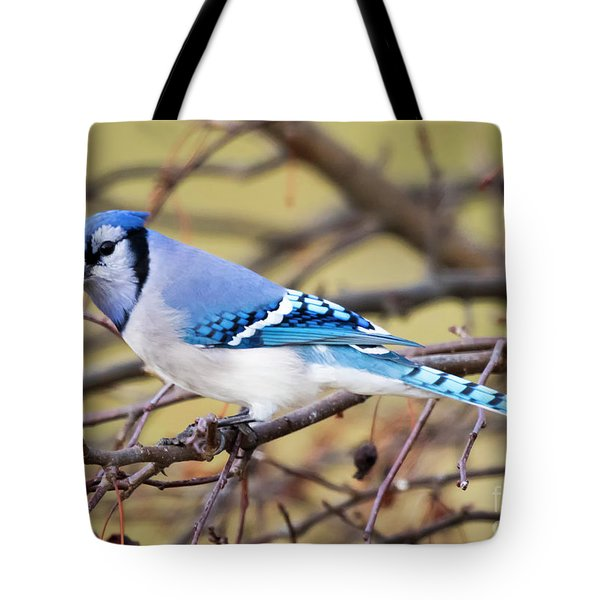The Winter Blue Jay  Tote Bag by Ricky L Jones