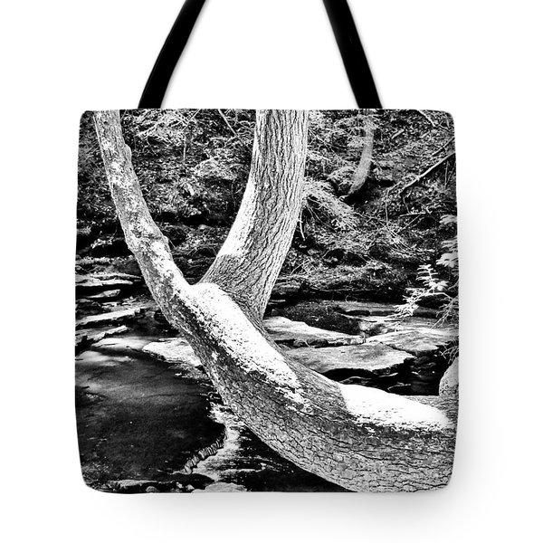 The Wishbone Tree Bw Tote Bag