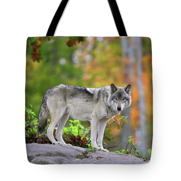 The Wolf. Tote Bag