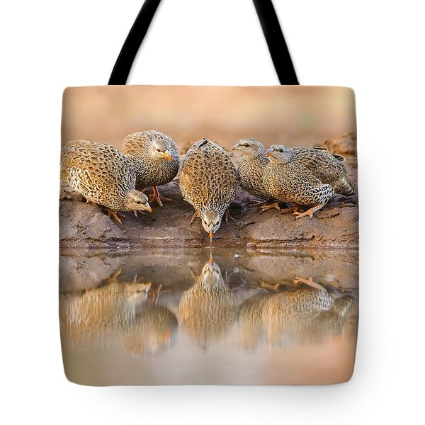 Thirsty Francolins Tote Bag