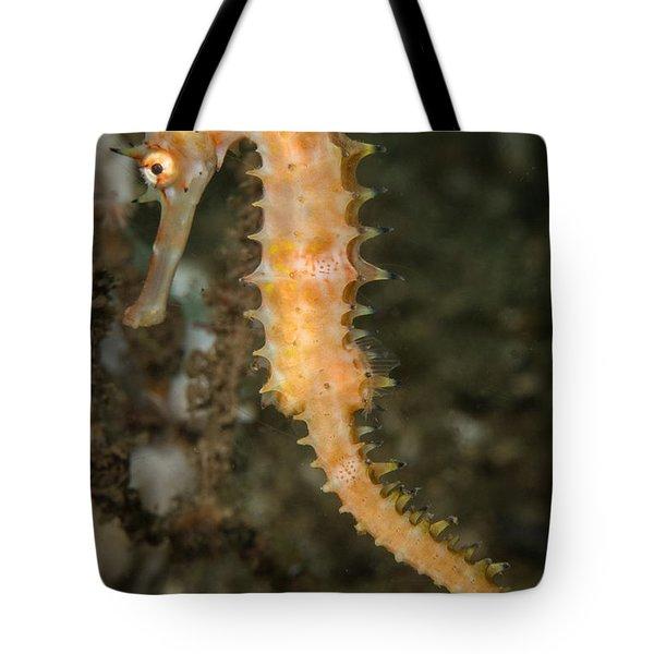 Thorny Seahorse Tote Bag