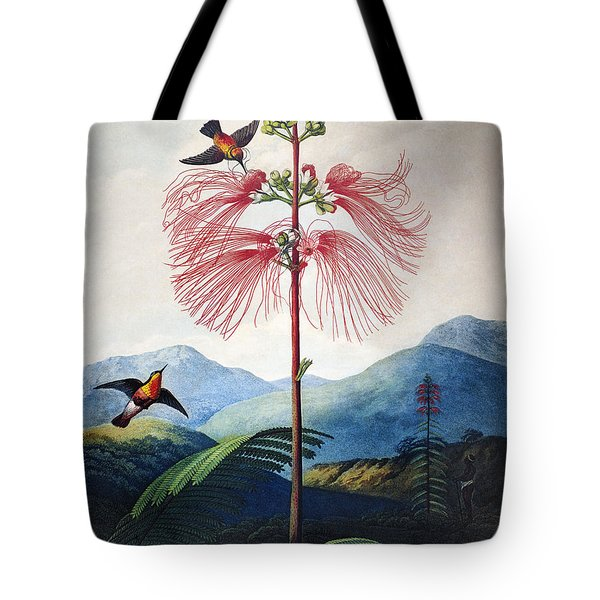 Thornton: Sensitive Plant Tote Bag by Granger