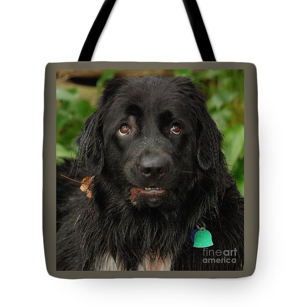 Tote Bag featuring the photograph Those Eyes by Debbie Stahre