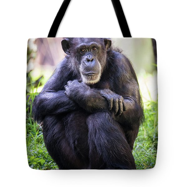 Thoughtful Chimpanzee  Tote Bag by Stephanie Hayes