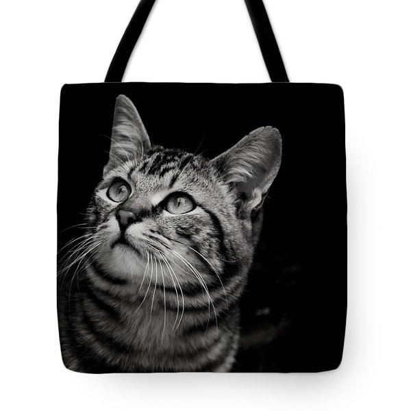 Tote Bag featuring the photograph Thoughtful Tabby by Chriss Pagani