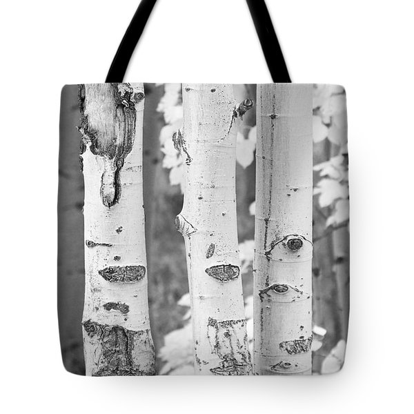 Three Aspens In Black And White  Tote Bag