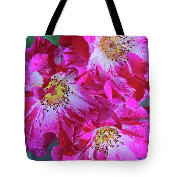 Three Climbing Roses Tote Bag