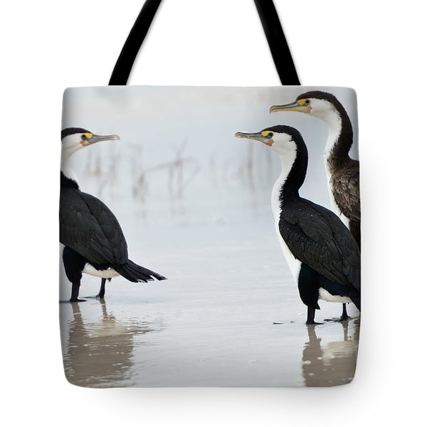 Tote Bag featuring the photograph Three Cormorants by Werner Padarin