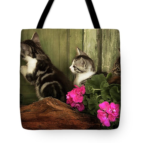 Three Cute Kittens Waiting At The Door Tote Bag