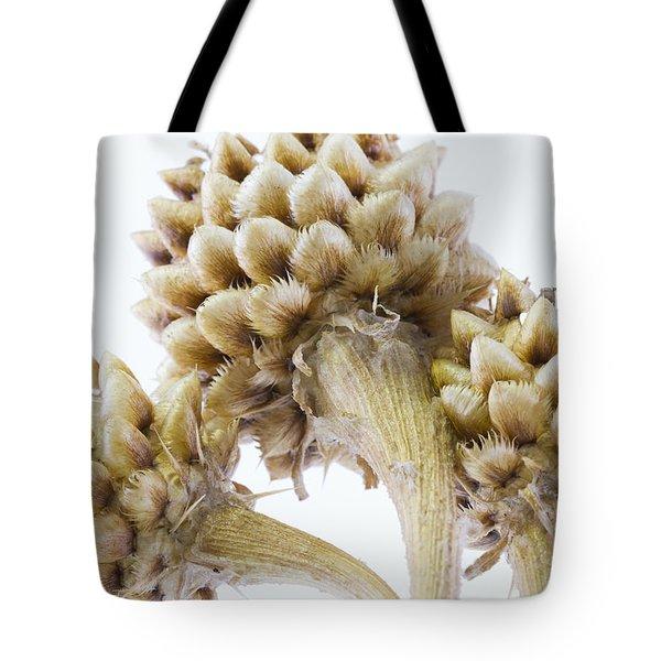 Three Globe Cornflower Seed Heads - Macro Tote Bag by Sandra Foster
