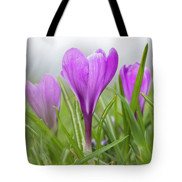 Three Glorious Spring Crocuses Tote Bag