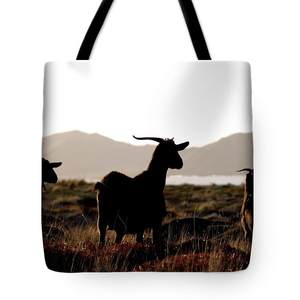 Tote Bag featuring the photograph Three Goats by Pedro Cardona
