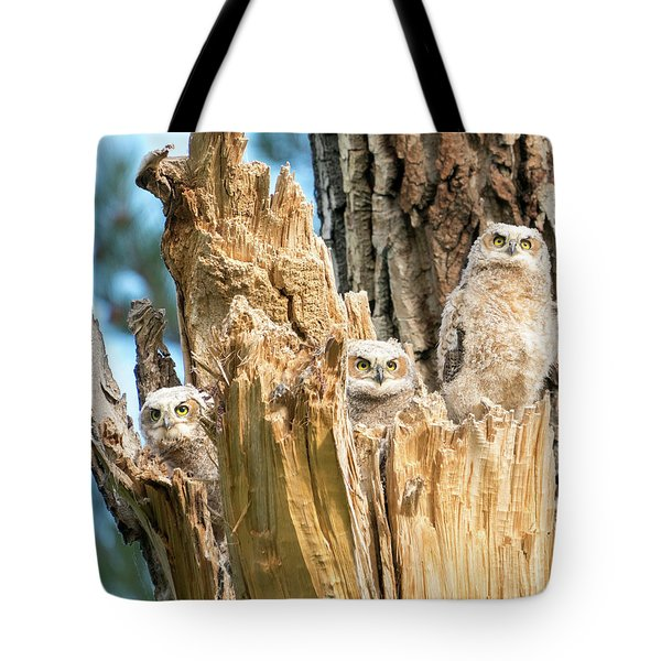 Three Great Horned Owl Babies Tote Bag