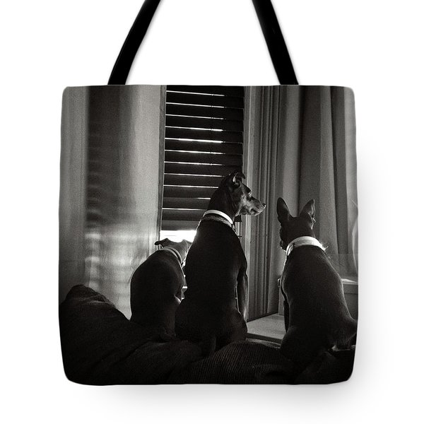 Three Min Pin Dogs Tote Bag