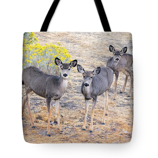 Tote Bag featuring the photograph Three Mule Deer In High Desert by Frank Wilson