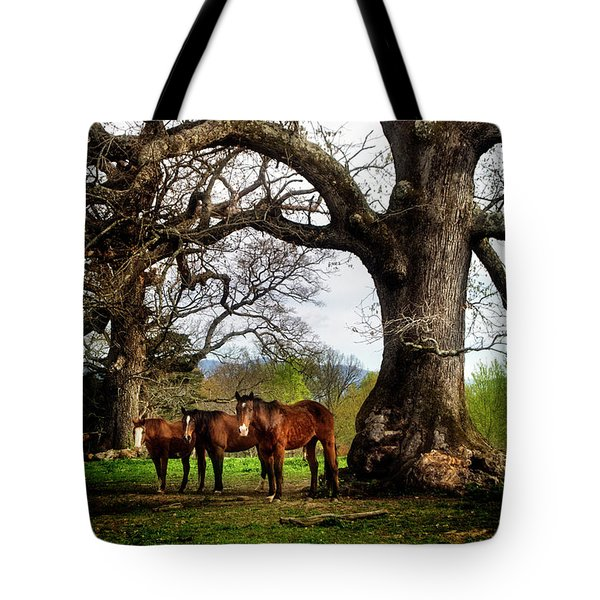 Three Under A Tree Tote Bag by Greg Mimbs